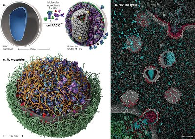 Image shows the cellPACK method of ultrastructure shells being packed with molecules, Jiri Klusak's HIV life cycle image, and a Mycoplasma Mycoides model